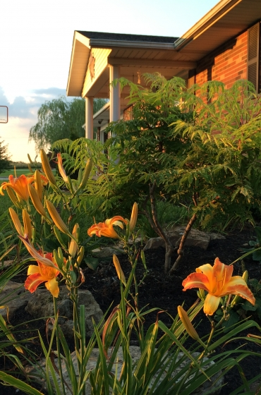 Blooming perennials in a home garden